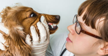 Odontologia Veterinária: em todo o mundo falta educar e padronizar procedimentos