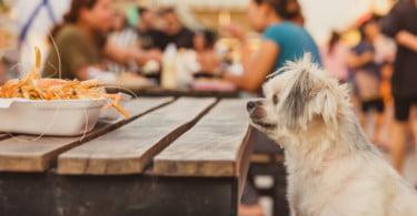São menos de 50 os restaurantes que permitem a entrada de animais