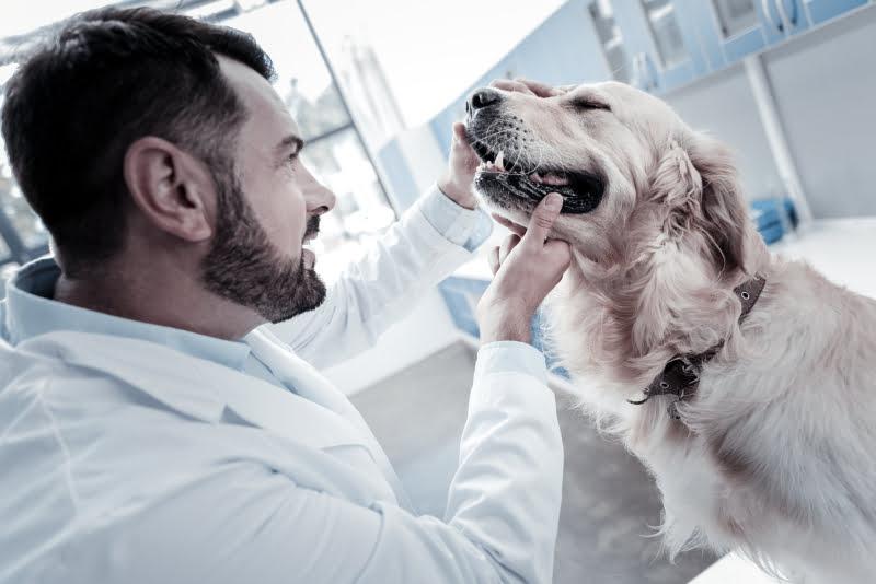 Cheque veterinário chega aos Açores