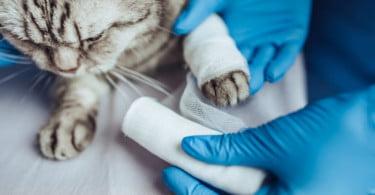 Hospital do Gato promove curso teórico-prático em medicina felina para enfermeiros veterinários