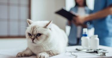 Publicadas novas orientações para anestesia de felinos