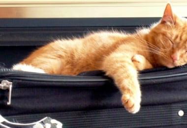 Vai viajar com o seu animal? Saiba que regras deve seguir