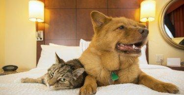 Hotéis para animais com lotação esgotada entre junho e agosto