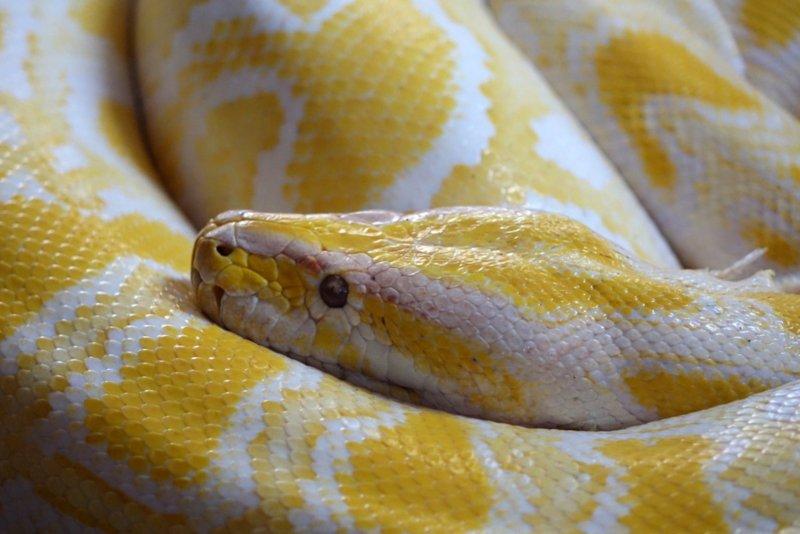 Dia Mundial da Serpente: Jardim Zoológico prepara cobras e lagartos
