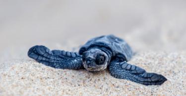 Nações Unidas quer publicidade a contribuir para a conservação da vida selvagem