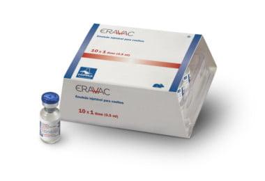 Hipra lança nova vacina para prevenção da doença hemorrágica do coelho do tipo 2