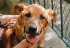 Número de animais abandonados continua a aumentar