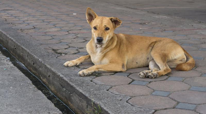 """Bastonário da OMV acusa Governo de """"irresponsabilidade"""" por não ter estudado problema do abandono de animais"""