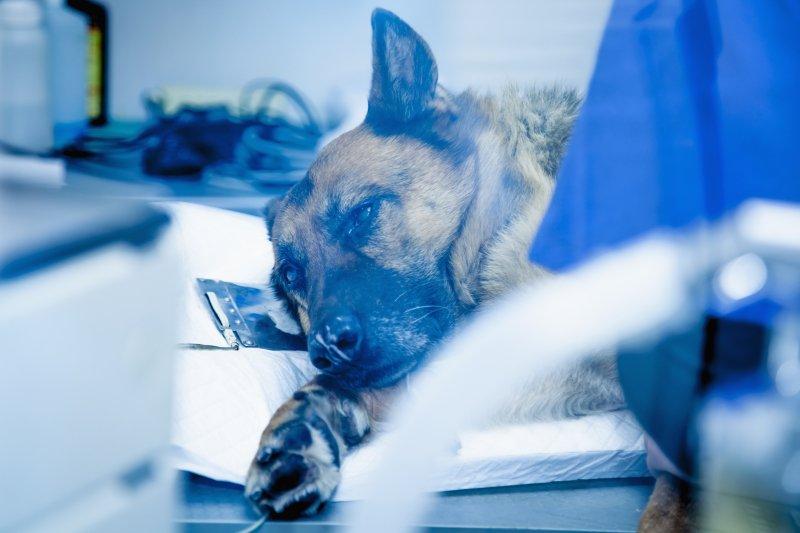 Cães hospitalizados com maior predisposição para desnutrição