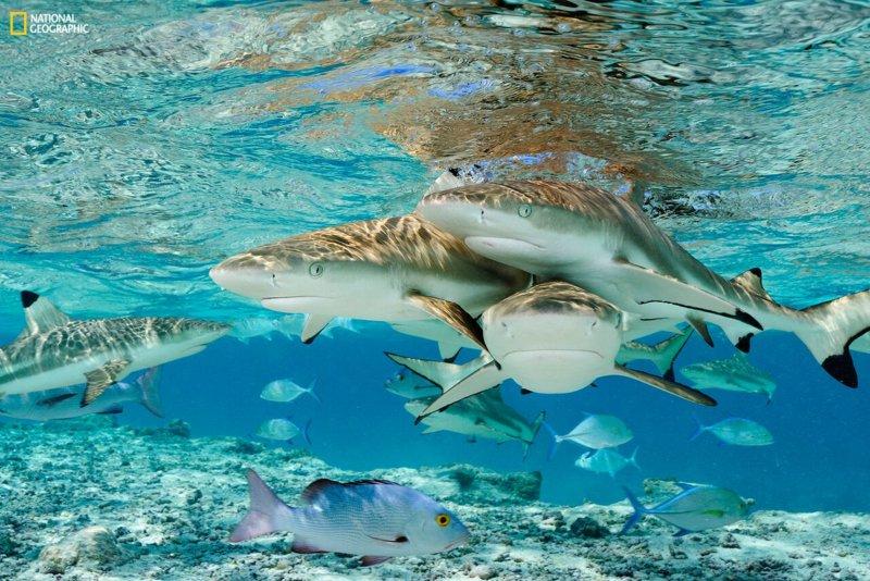 Oceanário convida a uma viagem ao mundo dos tubarões