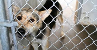 Veterinários britânicos avisam: importação de cães coloca saúde animal e humana em risco