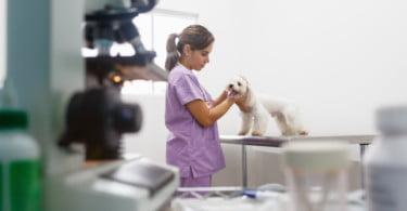 Tendências do sector veterinário