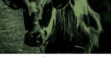 Seminário 'Aspetos de Bem-estar animal e produção pecuária' é já esta semana