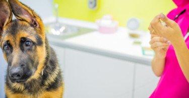 Grupo Animar: Cuidados de saúde e bem-estar animal de proximidade
