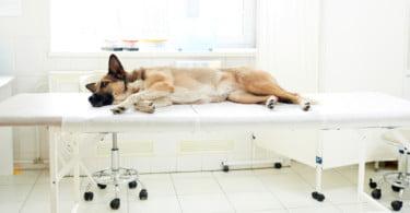Oncologia Veterinária: mais esperança e casos de sucesso