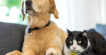 Seminário online ensina a controlar diabetes em cães e gatos