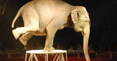 Animais selvagens fora dos circos em seis anos