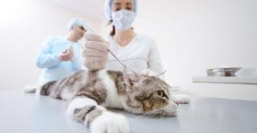 Exército abre concurso a médico veterinário