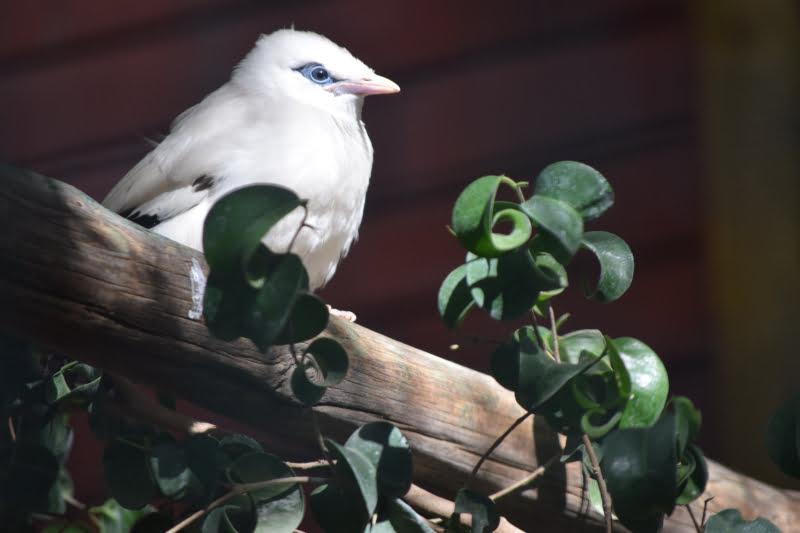 Jardim Zoológico acolhe nascimento de ave quase extinta