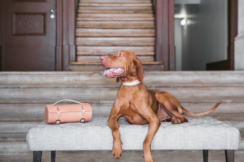 As 7 prendas perfeitas para médicos veterinários