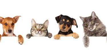 """BVA lança guia para """"utilização responsável"""" de animais em publicidade"""