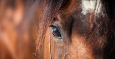 UE aprova primeiras orientações de bem-estar para cavalos