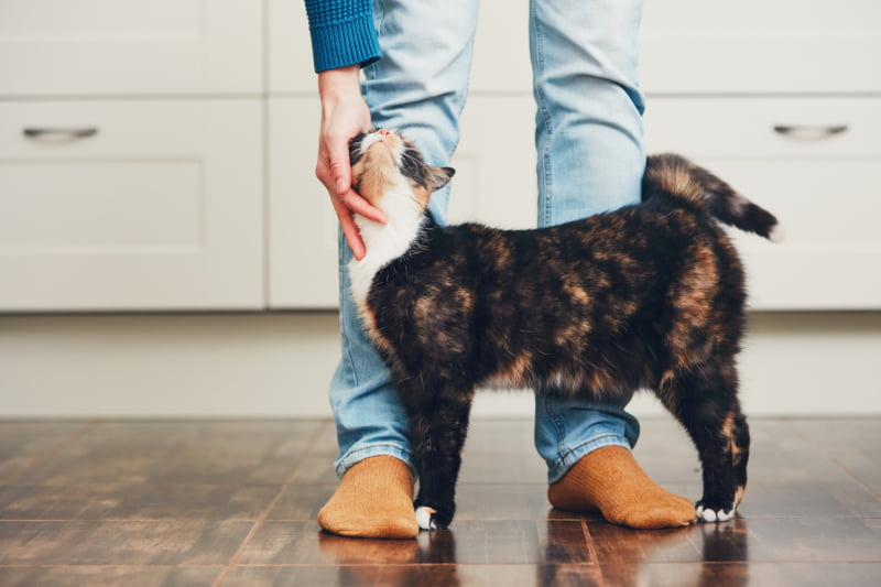 Tutores não procuram ajuda para problemas comportamentais dos gatos