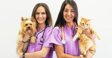 Há ou não excesso de médicos veterinários?