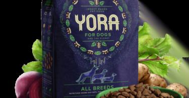 Marca britânica cria ração para cães à base de insetos