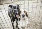 Veterinários municipais alertam para 'listas de espera' na recolha de animais para canis