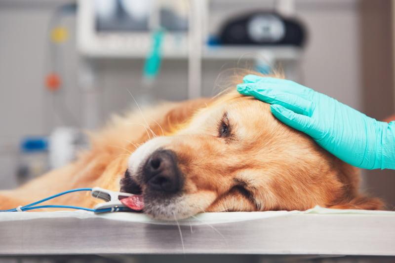Governo espanhol aprova diminuição do IVA de serviços veterinários