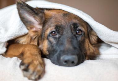 Plano de contingência para sem-abrigo de Lisboa vai contemplar animais