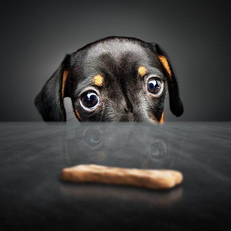 Quais os segredos de uma alimentação equilibrada para cães e gatos?