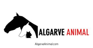 AlgarveAnimal: defensores da causa animal criam site para partilha de informação