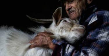 Organização Mundial de Saúde Animal vai premiar fotografias que destaquem trabalho dos profissionais de medicina veterinária