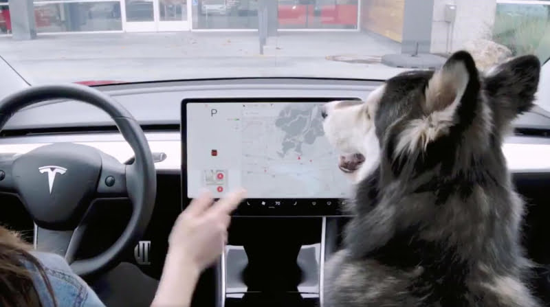 Tesla introduz funcionalidades 'dog friendly' no Model 3