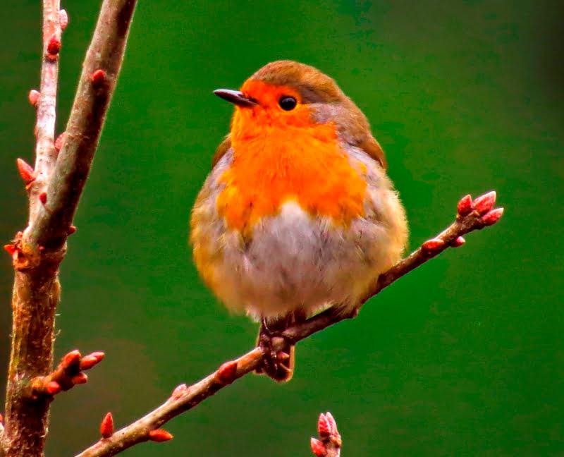 Descoberta: aves transportam fungos para colonizar novos territórios
