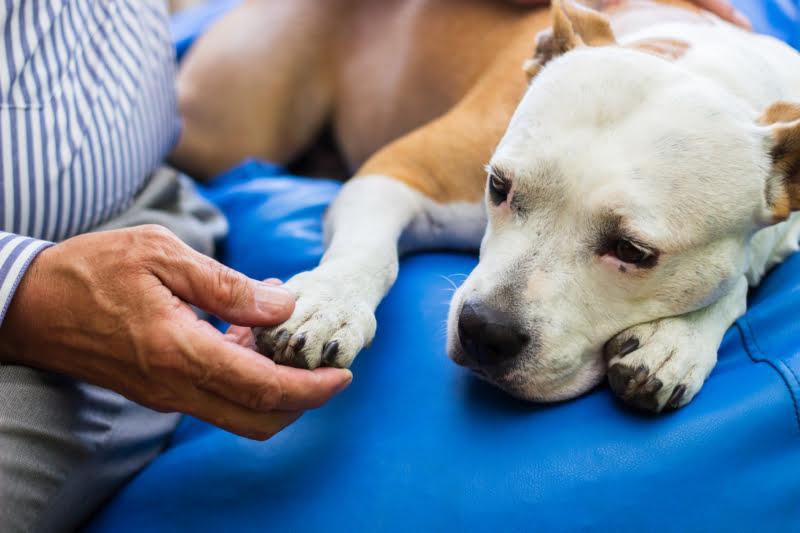 Já existe tratamento para osteossarcoma canino sem quimioterapia