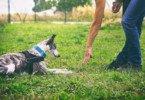Município do Porto dá aulas gratuitas de educação canina