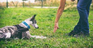 Bem-estar e segurança animal em debate este fim de semana
