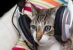 Poderá a música diminuir os níveis de stress dos gatos durante a consulta?