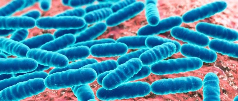 Investigadores do Reino Unido detetam 'superbactéria' resistente aos antibióticos em cão