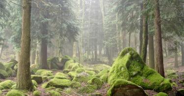 Há 1700 espécies animais em risco de extinção até 2070