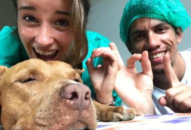 Estudantes de veterinária portugueses rumam a África para ação humanitária