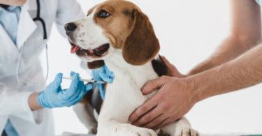 Organizações veterinárias recordam os perigos da não vacinação dos animais