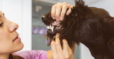 Investigadores descobrem genes associados à deterioração do esmalte canino