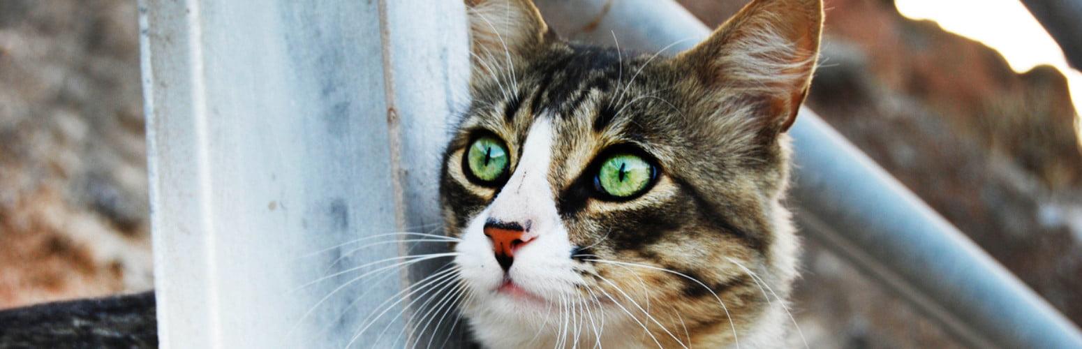 Reprodução Felina em debate no Hospital Veterinário do Atlântico