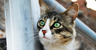 Câmara de Lamego cria abrigo para colónias de gatos