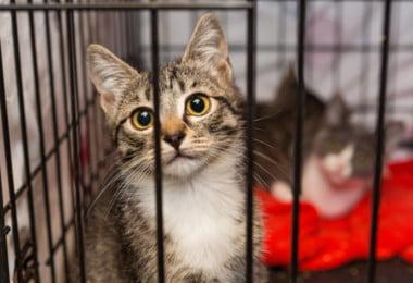 Município de Loures reforça apoio a associações de defesa animal