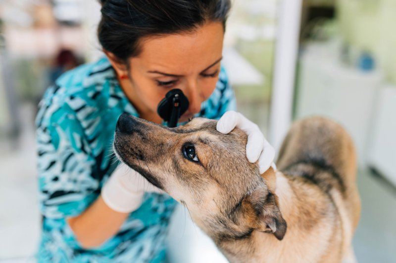 Novo Código Deontológico Médico-veterinário em consulta pública